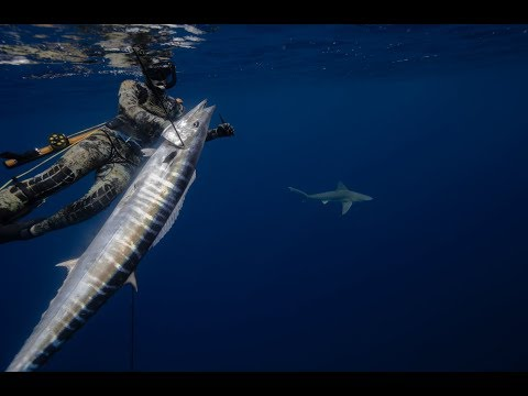 North Carolina Spearfishing