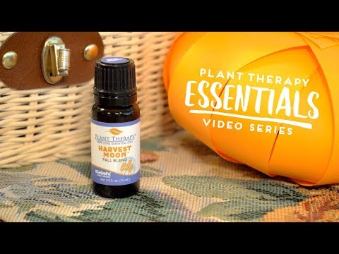DIY Paper Pumpkins | Plant Therapy Essentials
