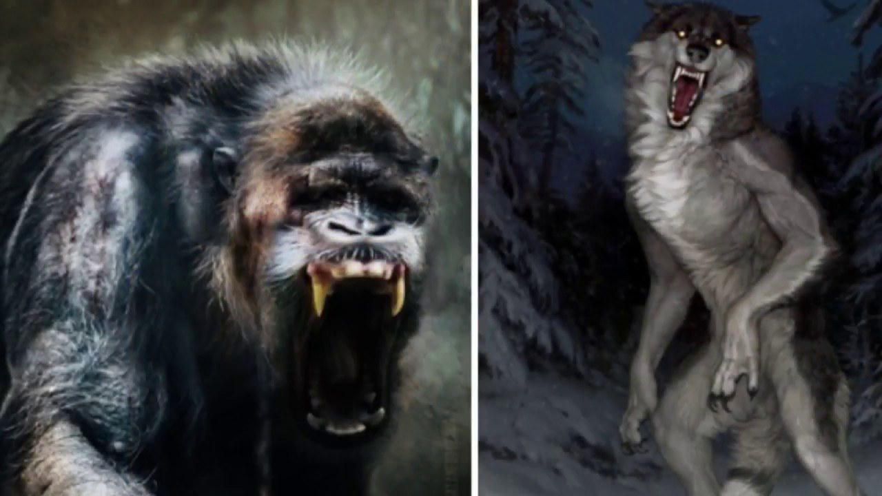 Video - The Gugwe and The Dogman | Cryptid Wiki | FANDOM