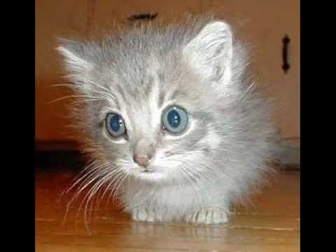 Happy Birthday to You - MewMew the Kitten