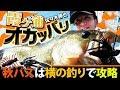 【ダイワ・佐々木勝也】秋の霞ヶ浦を「横の釣り」で徹底攻略