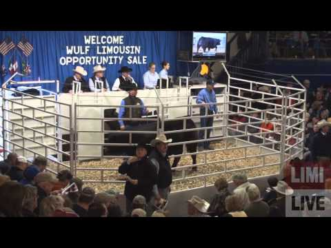 2012 Wulf Limousin Opportunity Sale