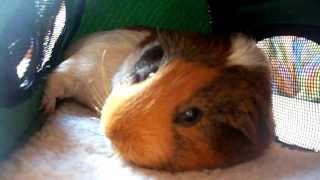 Chonchon qui dort comme un chat ... trop mignon