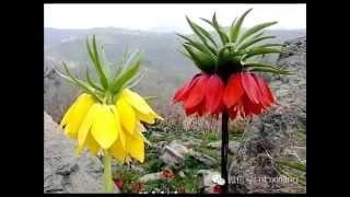 Rarely Seen Flowers 奇特花朵