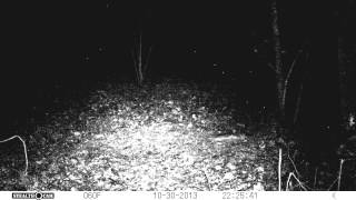 COUGAR IN NC!!!!!!!