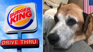 Burger King gives dog with cancer cheeseburgers for life - TomoNews