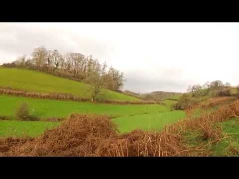 high pheasant shooting in devon and working dog tony white