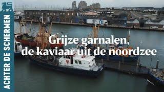 Grijze garnalen, de kaviaar uit de noordzee