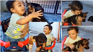 One year old playing with German shepherd puppies