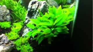 10g planted tank update 2