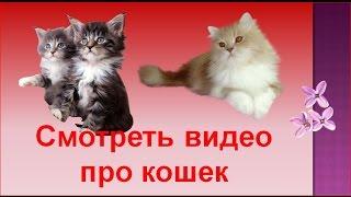 смотреть видео про кошек -  приколы