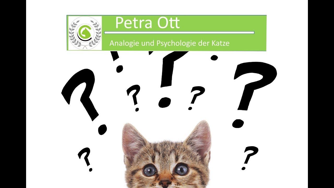 Nett Katzen Ohranatomie Ideen - Physiologie Von Menschlichen ...