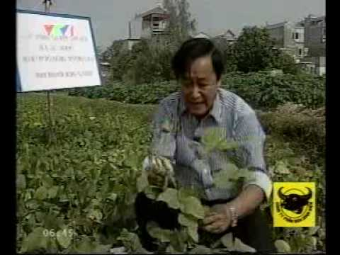 Giáo sư Nguyễn Lân Hùng nói về NEB-26 3