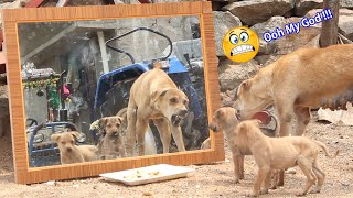 Mirror Prank For Dog Hilarious Reaction Mirror Prank Try not to Laugh  So Funny Prank Video 2021