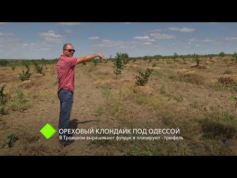 выращивание грибов трюфел