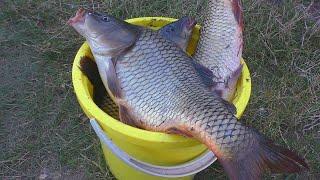 Рыбалка на карпа. Ловля карпа на поплавочную удочку. My fishing