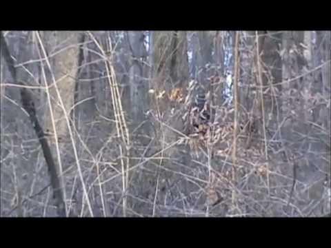 ohio grassman found bigfoot youtube