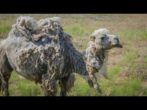 Kazakhstan - Van Life gone bad