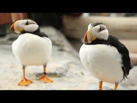 Seabirds are Coming to Georgia Aquarium!