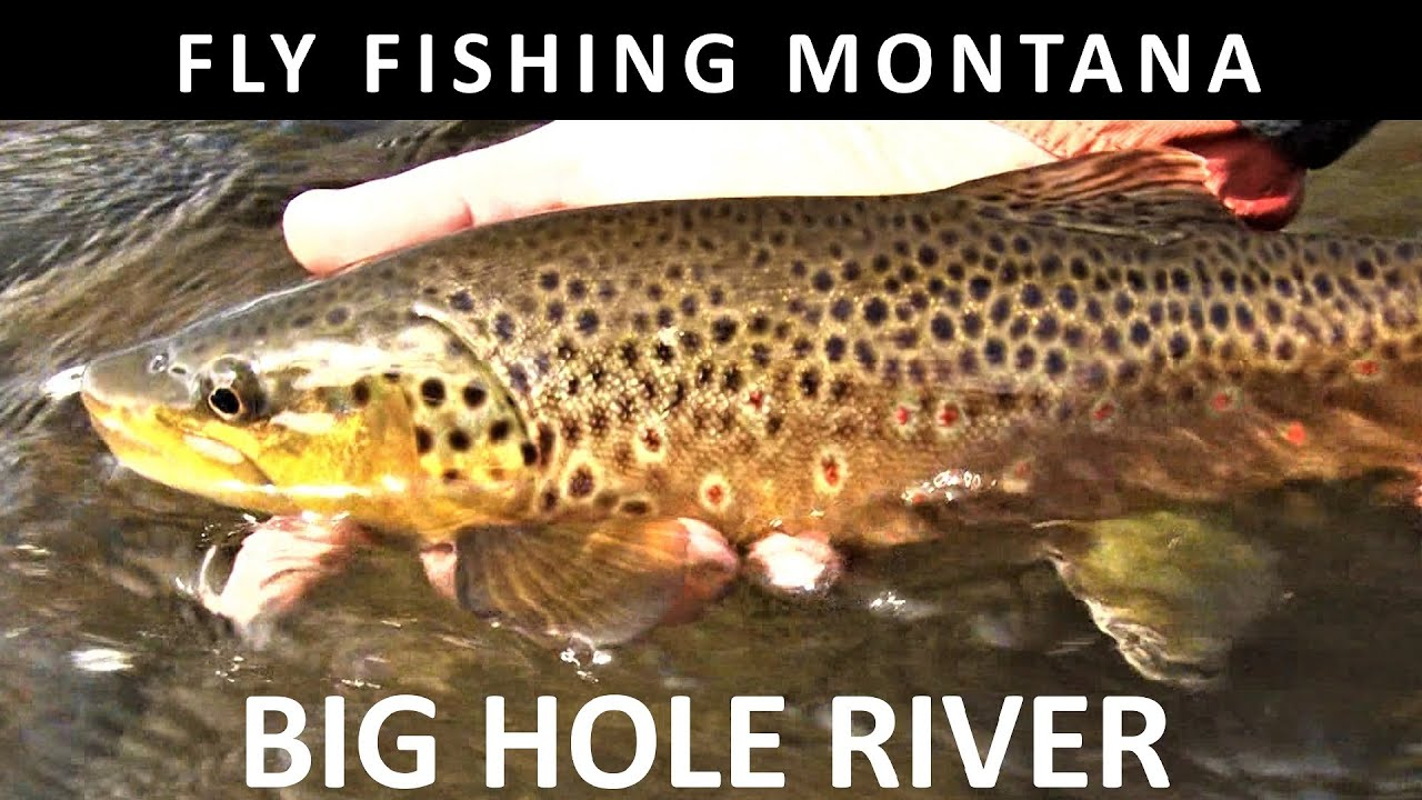 Fly Fishing Big Hole River Montana September Trailer For Full