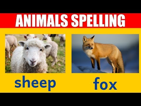 Animal Names - Learn Spelling and Pronunciation of Words in