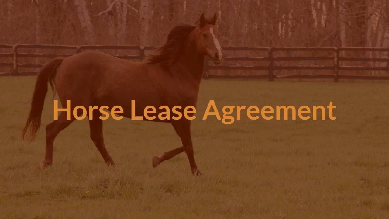 Horse Lease Agreement   YouTube