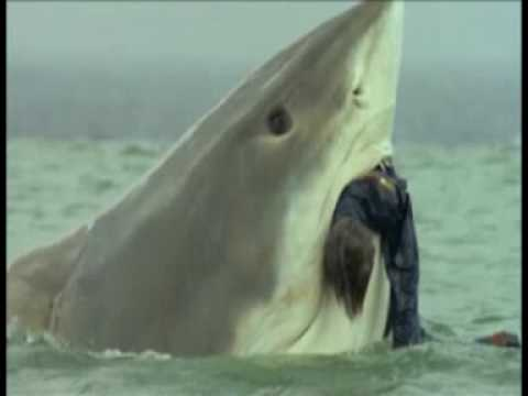 "The Last Shark ""Shark Theme"" - YouTube"