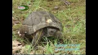 В Пицунде сохранился редкий вид черепах