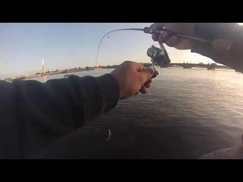рыбалка Санкт Петербург река Нева август 2019