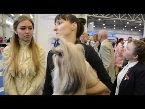 Выставка собак Киев 2016