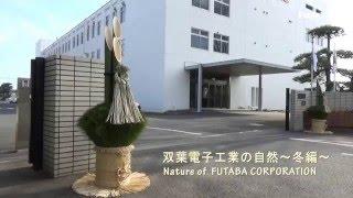 双葉電子工業の自然を見てみよう~冬編~ Nature of FUTABA CORPORATION -Winter edition-