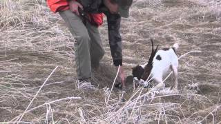 Double Barrel Ranch Pheasant Hunt