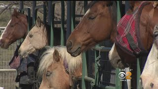 2 On Your Side: Returning To Gibson Ranch