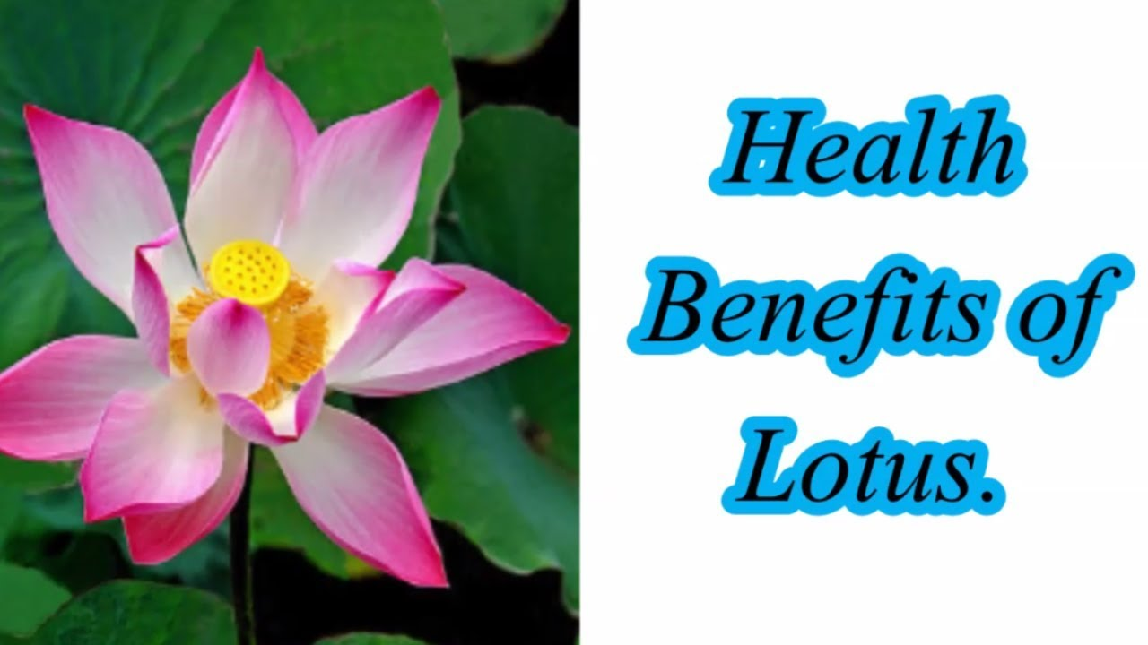 6 health benefits of lotus youtube 6 health benefits of lotus izmirmasajfo Images