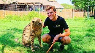My Best Travel Experience: Volunteering with Big Cats in South Africa
