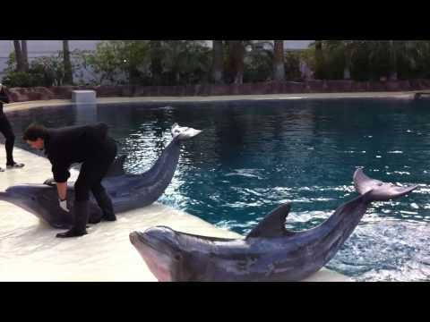 Mirage Dolphin Show @ Las Vegas