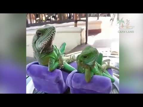Best Funniest and Cutest Animals 😻 Cute and Funny Animal Videos Compilation 😹 Cafa Land #35