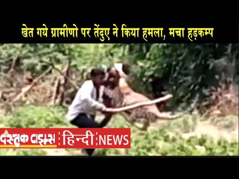 खेत गये ग्रामीणो पर तेंदुए ने किया हमला, मचा हड़कम्प।