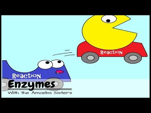 enzimas video: