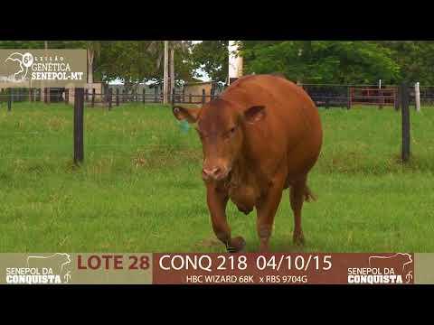 LOTE 28 CONQ 218