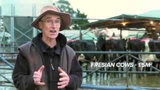 DairyNZ Improving Cow Flow