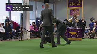 Spaniels English Cocker | Breed Judging 2019