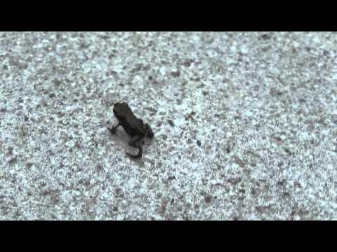 mini kikker