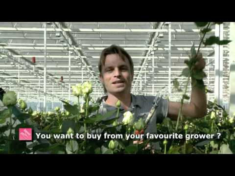 G-Fresh (english) Flower export Holland