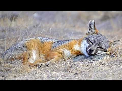 16 Amazing Fox Species