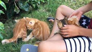 Милые котята из нашего отеля в Турции. Cute kittens.