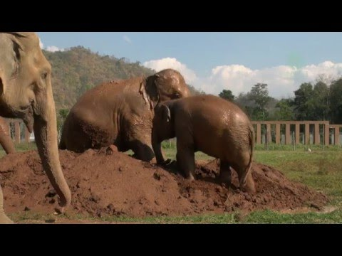 Celebrate Thai elephant day March, 13 :...