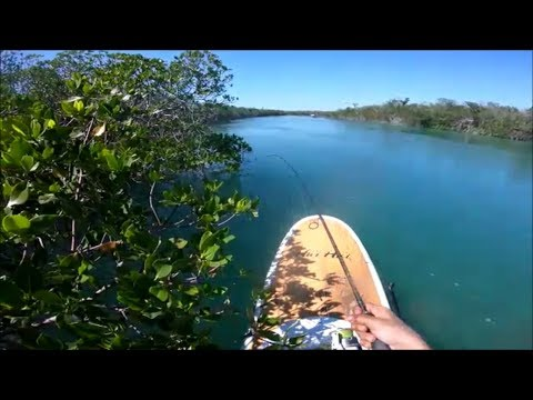 PADDLE BOARD FISHING EXPLORING THE FLORIDA KEYS