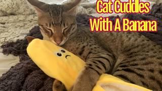 Cute Cat Cuddles With A Banana/Cute Cat Video