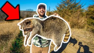 Trapping GIANT RACCOON in My BACKYARD!!! (Catch Clean Cook)